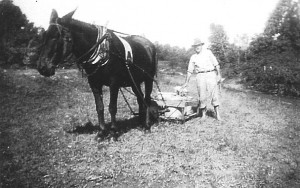 E.W. Berry with mule and slide cart, used to transport bullfrogs and tadpoles across short distances.