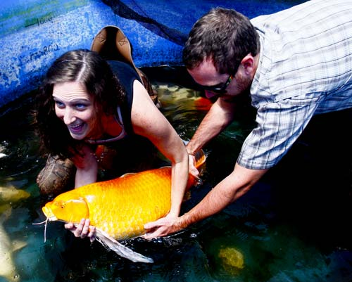 man and woman with orenji ogon butterfly koi breeder