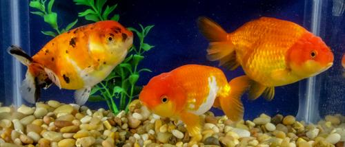 Featured fish week of april 2nd 2018 blue ridge fish for Blue ridge fish hatchery